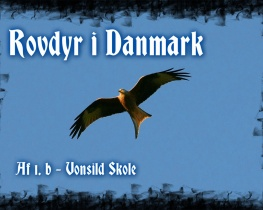 Rovdyr i Danmark