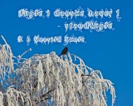 Fugle i danske haver 1 - Standfugle