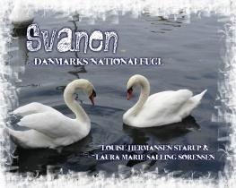 Svanen - Danmarks nationalfugl